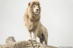 Casper @ IOW Zoo