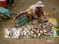 Woman selling fish - Mekong Discovery