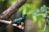 _DSC2488 (Eric framed) Tags: blue red arizona green bird phoenix animal zoo monkey nikon dof desert bokeh az d750 28 70200 vrii