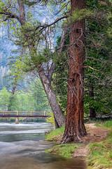 High Water (Kirk Lougheed) Tags: california bridge usa tree water river landscape nationalpark spring unitedstates outdoor yosemite yosemitenationalpark yosemitevalley mercedriver cooksmeadow superintendentsbridge