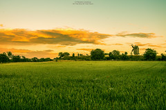 At The End Of The Field (Fredrik Lindedal) Tags: nature windmill landscape field fredriklindedal onewithnature flower green gotland clouds color orange trees sky depthoffield skyline sunlight nikon summer serenity harmony
