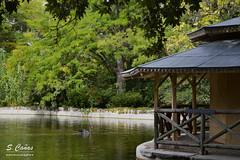 (Ousia Dark) Tags: parquedelcapricho cisne nikon nikond3200 color arboles estanque pond relax landscape madrid espaa spain travel nature naturaleza