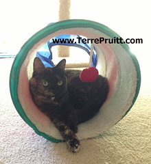 2016 - Esmeralda in tunnel for 07.27.16 post (Terre's Photos) Tags: smokeyandesmeralda thedancingcat catadoption picturesofcats catparents danceexercise terrepruitt niateacher niabluebelt cpt sanjosenia sanjoseniaclasses sanjoseexerciseclasses wwwhelpyouwellcom wwwterrepruittcom sanjoseniateacher piyo pilates yoga exercise workout sanjoseworkout niasanjose danceexerciseclass danceworkout cardiodance groupexclasses ymca nia niaclass niatechnique sjcityfit