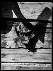 Shadow play (Kent Vegard Evjen) Tags: vds vds8x10 homemade largeformat 300mmfujinon sheetfilm film wood fishtail planks shadow sun dark kentvegardevjen outdoors contrast monochrome outdoor surreal 8x10 18x24cm monochroime black white blackandwhite border wholefilm fish fomapan100 100 asa 100iso