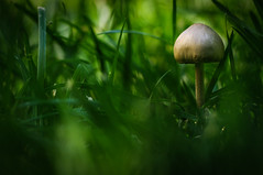 alone... (Angelo Petrozza) Tags: fungi funghi prato green verde focus bokeh pentax zeiss