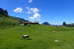 Prairie @ Schwägalp (8pl) Tags: vaches maisons nuages pré montagne schwägalp säntis suisse cows infinitexposure