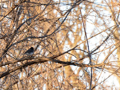 springtime on the Rock River Railway (turn off your computer and go outside) Tags: 2016 march rockriverrailwayjanesville wi wisconsin baretrees clearday earlyspring nature outdoors outside spring