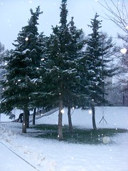 #white #winter #nature #tree #snowflakes #snow #cold #ice #holidays #green #botanical #landscape #snowing #christmas #beauty #wintertime #cloudy () Tags: landscape ice snowing wintertime beauty green cloudy holidays white snowflakes tree nature botanical cold christmas snow winter