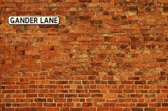 What's good for the goose ... (Paul Anthony Moore) Tags: goose gander brickwall wall bricks redbricks lane