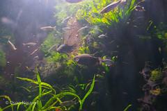 FujiXE2-0148 (QTTheory) Tags: cvg cincinnati ohio newport aquarium newportaquarium fujifilm fujinon xe2 xf 1855mmf284rlmois