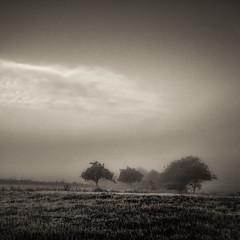 * (sedregh (on/off)) Tags: nebel fog mist landschaft landscape eifel