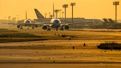 Morning Flights (ToDoe) Tags: plane morning morgen fluzeug airport sun golden backlight gegenlicht flughafen startbahn contrejour fra frankfurt