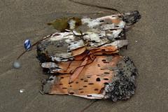 Nature's artwork on the shores of Coin-du-Banc (Perc), Qubec (Ullysses) Tags: coindubanc perc qubec canada gaspesie shore plage sea mer summer t birchbark