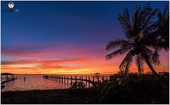 Florida Life: Setting The World On Fire (Thncher Photography) Tags: sony a7r2 sonya7r2 ilce7rm2 zeissfe1635mmf4zaoss fx fullframe scenic landscape waterscape nature outdoors sky clouds colors reflections silhouettes sunset piers docks beach fishing tropical island palmtrees hutchinsonisland stuart palmcity florida martincounty southeastflorida