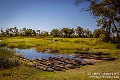 Mokoro Boats In The Okavango Delta, Botswana (NativePaul) Tags: africa wood travel vacation holiday water river boats boat honeymoon northwest traditional may roadtrip canoe botswana mokoro okavango southernafrica 2014 okavangodelta oddballs sadc mekoro chiefsisland may2014