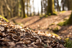 Spring is Coming (peter_1891) Tags: brown forest canon germany leaf spring bokeh sigma eifel 30mm gerolstein 600d
