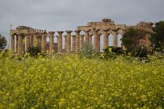 Selinunte : le Temple E (CpaKmoi) Tags: italia italie selinunte hera sicile sicila templee