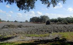 Sarasota Construction  - Field after Harrowing (roger4336) Tags: new oak florida cobblestone liveoak sarasota harrow subdivision 2015 palmerranch