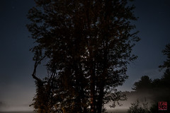 If You Go Out At Night (Mitymous) Tags: longexposure moon mist fog night moonlight zeiss28 momisgone
