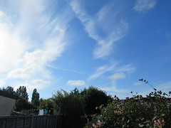Monday, 25th, Slightly cooler IMG_3139 (tomylees) Tags: essex morning summer july 25h monday 2016 weather blue