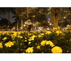 (lucero fairuz) Tags: miraflores surco lima peru city ciudad urban people strangers gente larcomar lomas de love flowers yellow faces nostalgic nature landscape parque kennedy