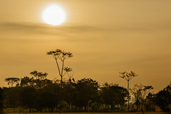 Another day (MFMarcelo) Tags: park light sunset sky cloud sun tree nature brasil canon eos sopaulo 5d 70200 ef70200mm canoneos5dmarkiii