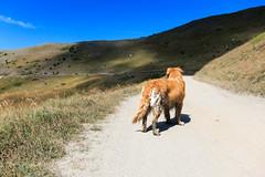 IMG_6648 (rickyrebora) Tags: col basset sauze doulx sestriere summer mountain montagna prati