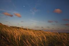 Beach grass during sunset (bschl) Tags: 24mm canoneos650d efs18135mmf3556isstm img3251cr2