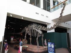 IMG_1721 (clare_and_ben) Tags: 2016 minnesota stpaul saintpaul sciencemuseumofminnesota fossil diplodocus dinosaur