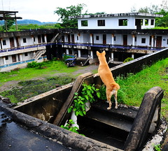 ,, The Dog Palace Roof ,, (Jon in Thailand) Tags: mama roof rain rocky sidecar blue thedogpalace green dog dgos k9 nikon d300 nikkor 175528 jungle courtyard mold stairs cementstairs littledoglaughedstories