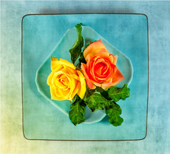texturized roses (Colleen Coombe) Tags: tabletopphotography flowers texture texturized closeup stilllife yellow orange aqua vivid
