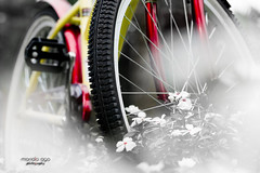 bike (mariola aga ~ OFF) Tags: cantignypark wheaton garden flowerbed flowers bike closeup blackandwhite colors art thegalaxy