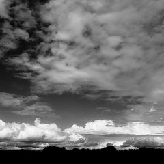 Springtime Skies 005 (noahbw) Tags: d5000 nikon prairiewolfsloughforestpreserve abstract blackwhite blackandwhite bw clouds forest horizon landscape minimal minimalism monochrome natural noahbw sky spring square woods