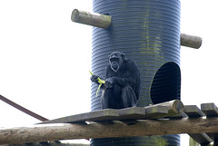 Escaping the begging hoardes (vic_sf49) Tags: vicsf49 uk england dorset monkeyworld cronin
