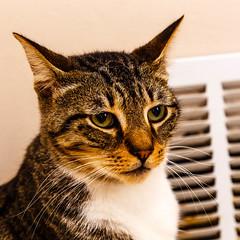 Rc13Aug1600028.jpg (fredstrobel) Tags: pawsatanta atlanta places pets animals ga usa pawscats cats decatur georgia unitedstates us