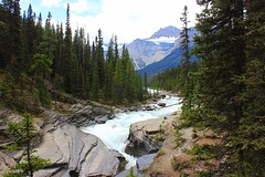 Mistaya Canyon (Eduardo Ruiz M.) Tags: outdoor tree fall water stream creek landscape banff mistaya plant mountain