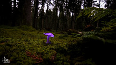 Funky Shrooms Selection (Ukelens) Tags: ukelens bern schweiz swiss switzerland suisse lightroom light lights licht lichter lighteffects lichteffekt lighteffect lichteffekte lightshow lighttrails lightpainting lichzeichnung lichtzeichung shadow shadows mushroom mushrooms shrooms forest forests wald pilz pilze