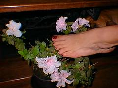 FASE 1 (SensooBR) Tags: wifelu apaixonadoporpes barefeet barefoot barefootsandals beautifulfeet beautifultoes belospezinhos brazilianfeet cutefeet cutetoes feet feetbrazil feetfetish feetlove feetlovers foot footfetish footfetishnation footlovers footmodel footworship gorgeeousfeet heels highheels lovefeet lovelyfeet nails pedi pedicure perfectfeet ps pesbrazil psfemininos pesfemininos pezinhos pezinhosdobrasil pies pieds podo podolatria prettyfeet selfeet sexyfeet sexytoes solas solinhas soles toes