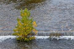 (JOAO DE BARROS) Tags: barros joao botany river