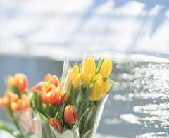 My march (vicamorozova) Tags: flowers light sun snow lensbaby river march spring bokeh tilt vicamorozova wwwvicamorozovacom