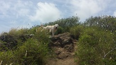 Kona Happy to be Back on the Trail (XJCreations) Tags: hawaii oahu lanikai bunkers kaiwa xjcreations