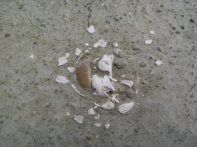 大漢溪化石13