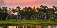 Kakadu Sunset (naturemomentsphotography) Tags: trees sunset water yellow gum sundown australia roland kakadu australien billabong moser bäume northernterritory kakadunationalpark topend eukalyptus naturemoments