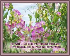 Sei getrost und unverzagt 2/ Be strong and courageous 2 (Martin Volpert) Tags: flower fleur christ god blossom faith flor blossoms pflanze blumen lord bible blomma christianity blume bibbia fiore blte herr blomst scripture virg scriptures lore biblia bloem gott blm iek floro kwiat flos holyspirit ciuri bijbel kvet kukka cvijet flouer glauben christentum bibleverses blth jesuschristus heiligergeist cvet zieds is floare blome iedas bibelverskarte mavo43 lovetruth