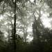 Floresta úmida