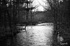 048 (d315thedeity) Tags: county trees wild bw ny newyork nature water creek river photography photo blackwhite scenery picture lewis upstate