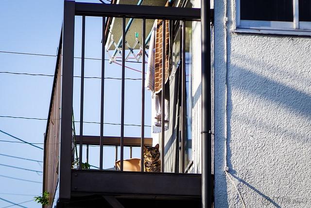 Today's Cat@2015-05-13