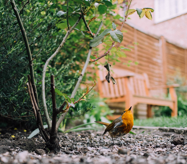 Ground level - robin