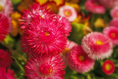 more flowers (try...error) Tags: pink red white yellow rot gelb blume fuji
