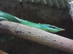 DSCF0155 (Stonehenge 68) Tags: zoo birmingham snake alabama lizard plantation antebellum birminghamzoo arlingtonhouse